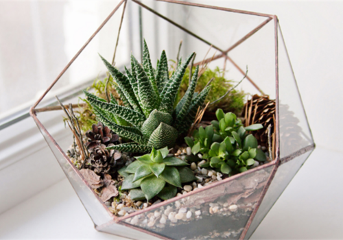 Event image for Make Your Own Terrarium