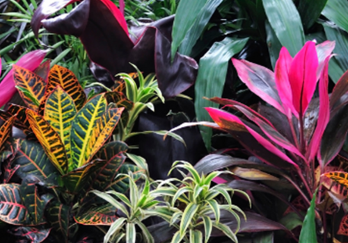 Event image for Tour of the Marsh Botanical Gardens